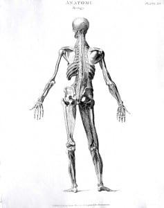 Body - Human Body