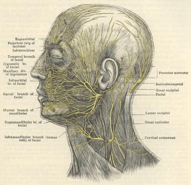 Neural Prolotherapy